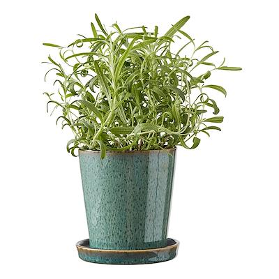 Bitz skjuler med underskål grøn/ sort 10 cm